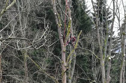 Prořezy stromů v blízkosti vedení VVN ČEZ.