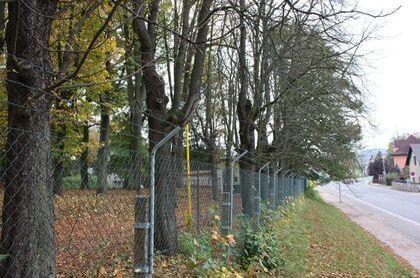 Kaštany (jírovec maďal) na Bojišti v Trutnově, které jsou nakloněny nad silnici, jsou přestárlé, v minulosti jim byl aplikován hlavový řez a následně neměly řádnou údržbu.
