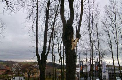 Strom poškozený větrem, který byl později napaden infekcí a začal postupně odumírat, v Trutnově.